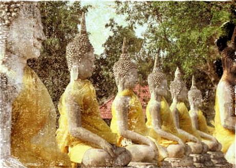 Buddhas meditating - 12/12/12