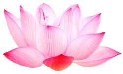Yol Swan: Intuitive Spiritual Mentor, Life & Business Coach